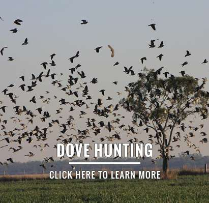 wingshooting - Argentina Dove Hunting