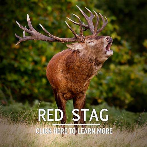 Red Stag Hunting